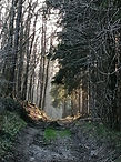 balade forêt randonnée
