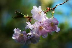 spring-flower-289844_1920
