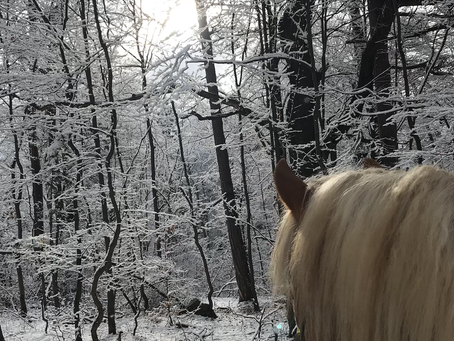 Walkin' and talking with horses