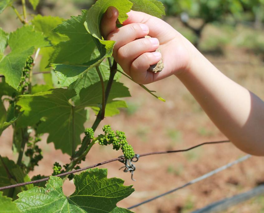 Tender Vines