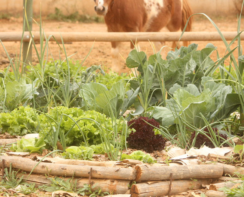 eyeing the vegetables