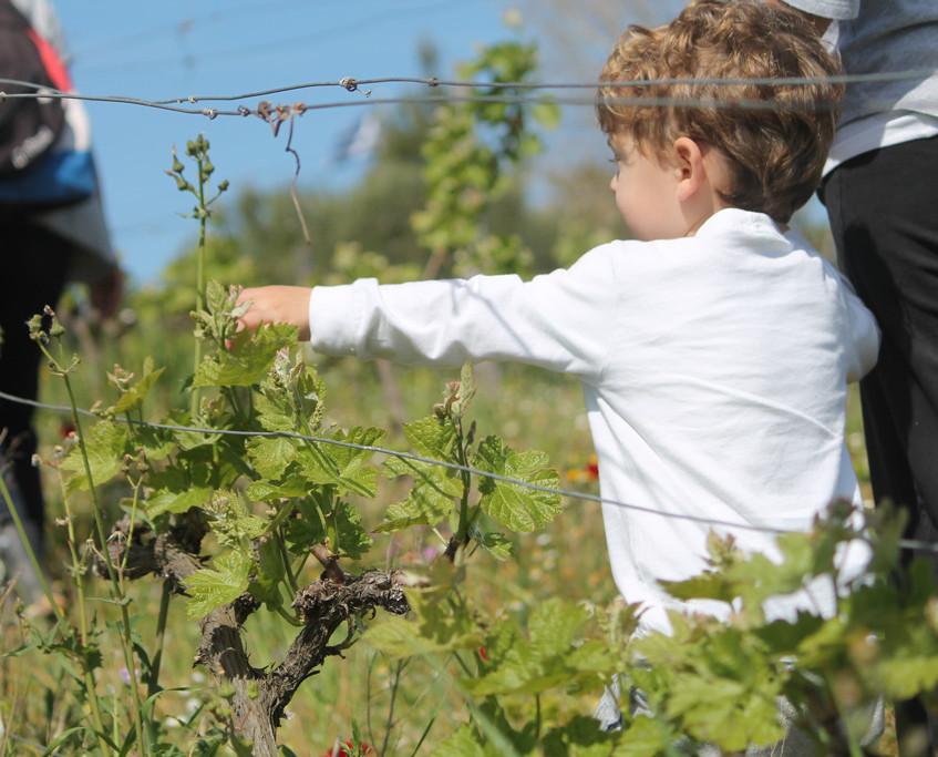Flowering Vineyard