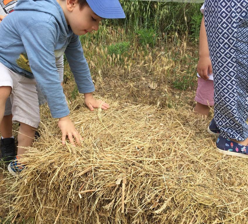 hay prickles;