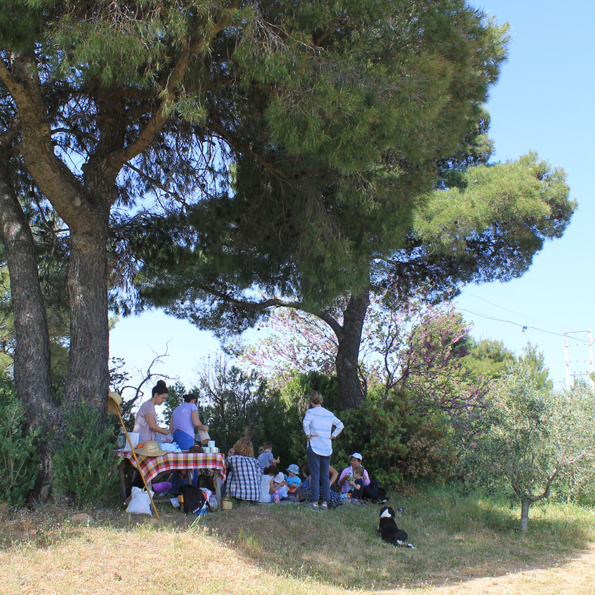 The Big Pine in the Orchard