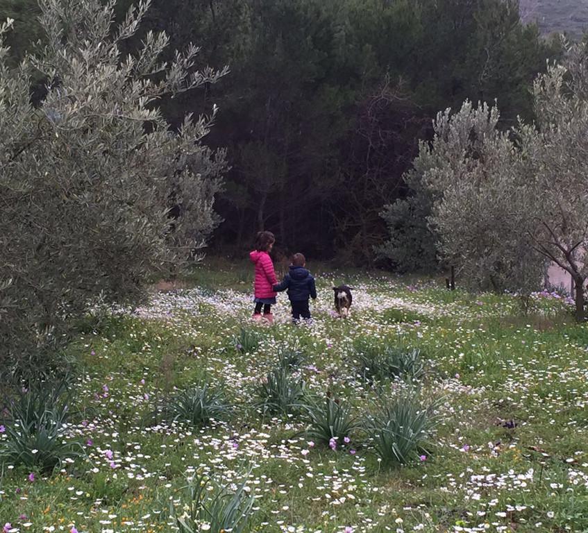 A Stroll in the Meadow
