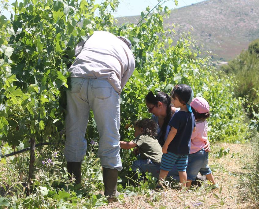A Lesson in Viticulture