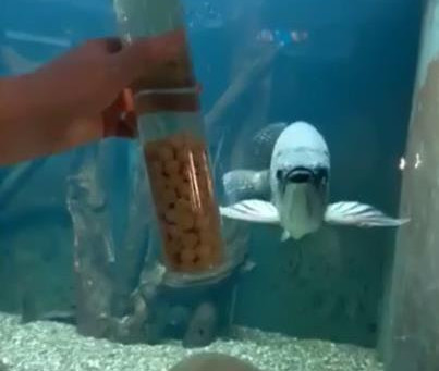 Участь в інтенсив-практикумі з акваріумного дизайну