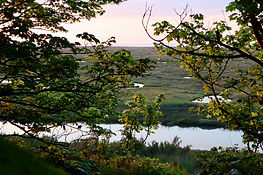 View from the trees over saltmarshes