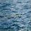 Thumbnail: Para la ave del océano 01