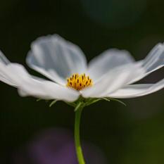 Blomma 4