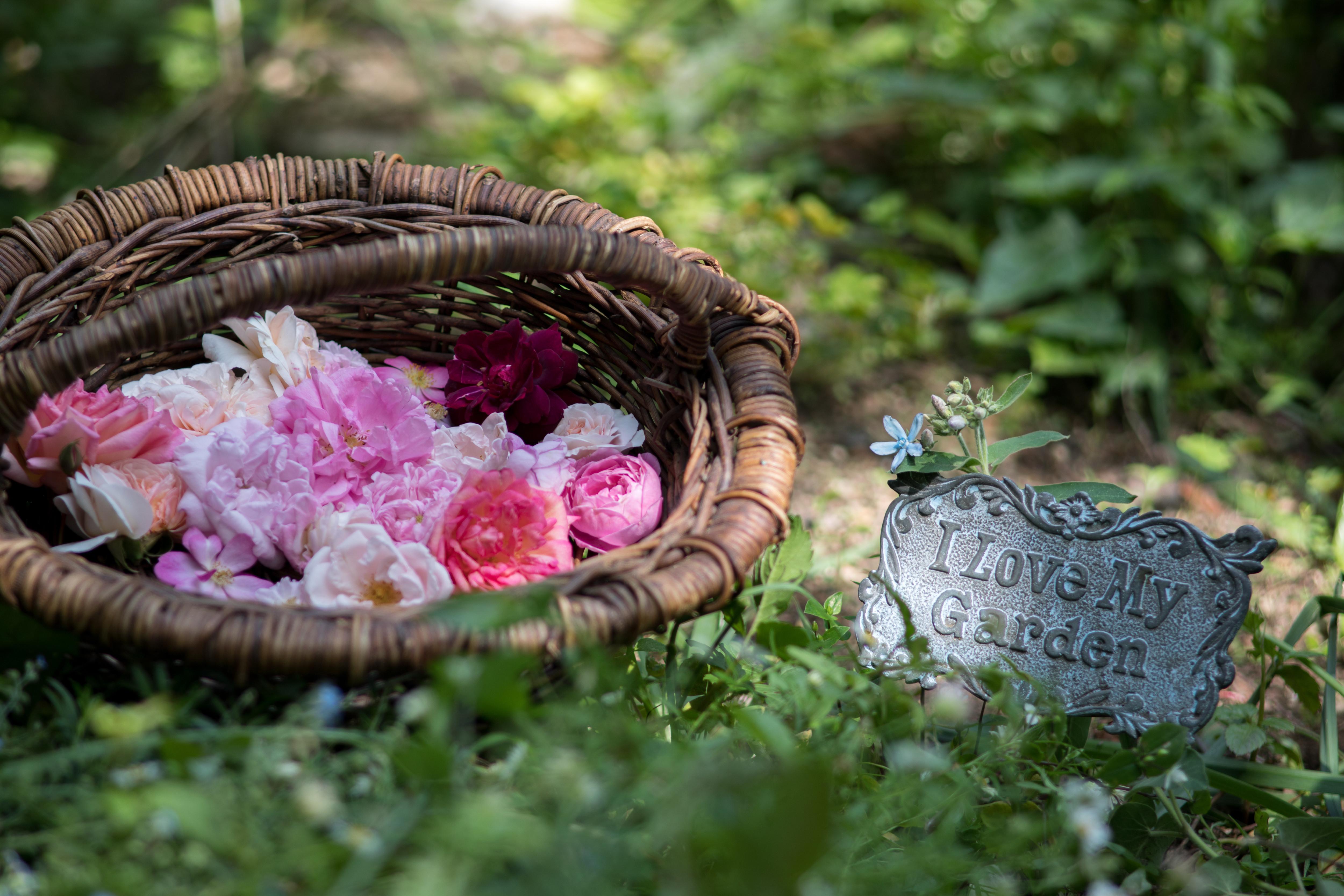 生朗読「秘密の花園」
