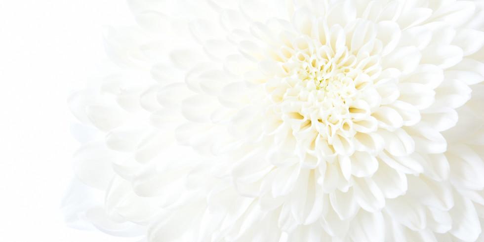 【夜の部】孝女白菊