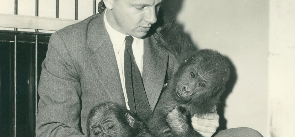AWA at Zoo holding 2 gorillas 1955.jpg