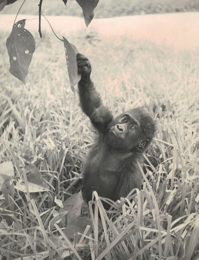 Nikumba in Congo 1955 #2_edited.jpg