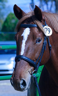 TJ at his first Dressage Show
