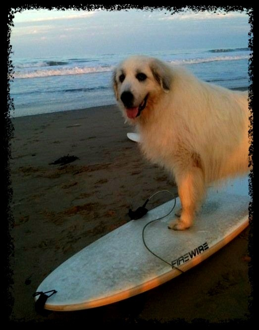 Sara Bear learning to surf in Venice