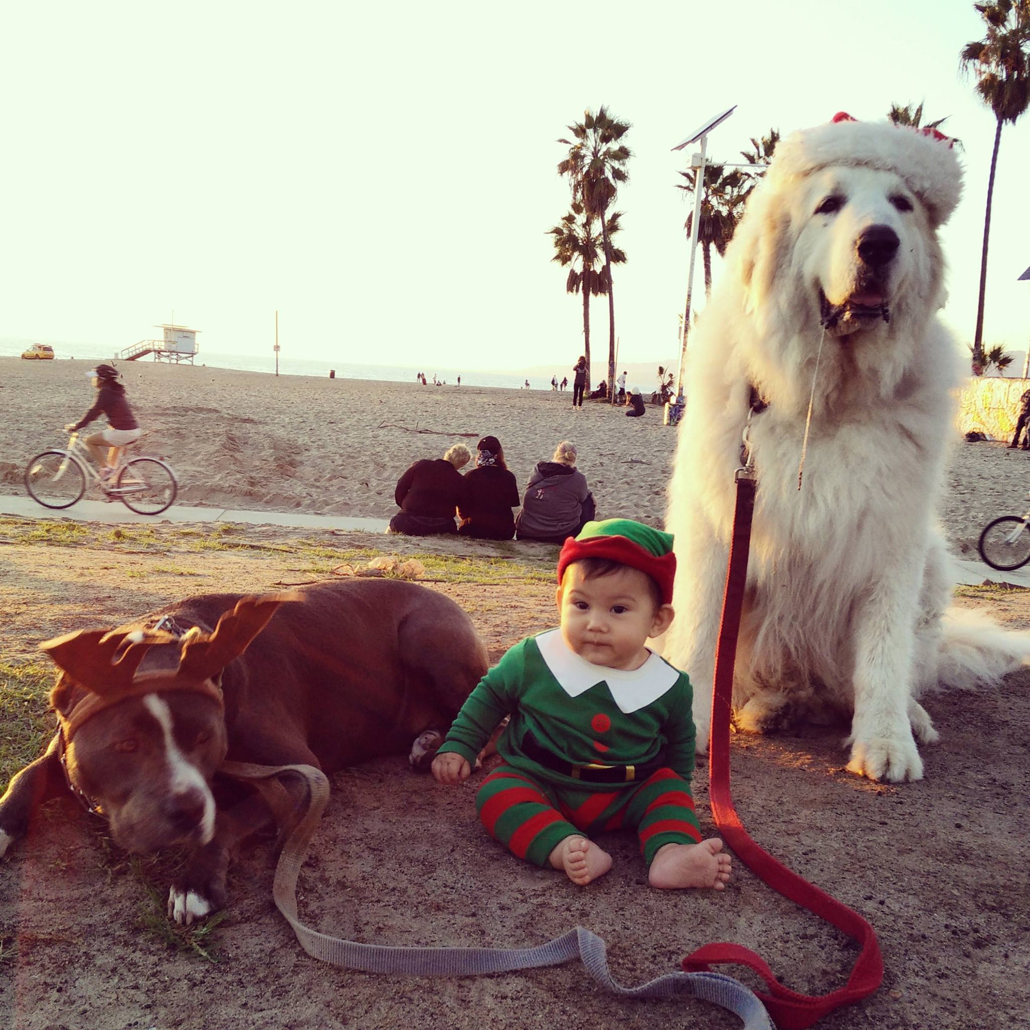 Santa Paws and His Elves