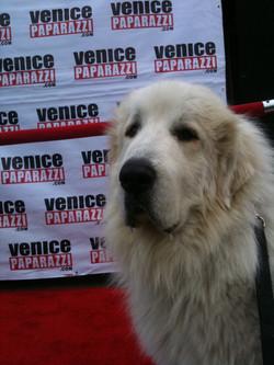 Ethan EasyE, Mayor of Venice Beach