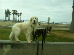 Dogtown Dogs!