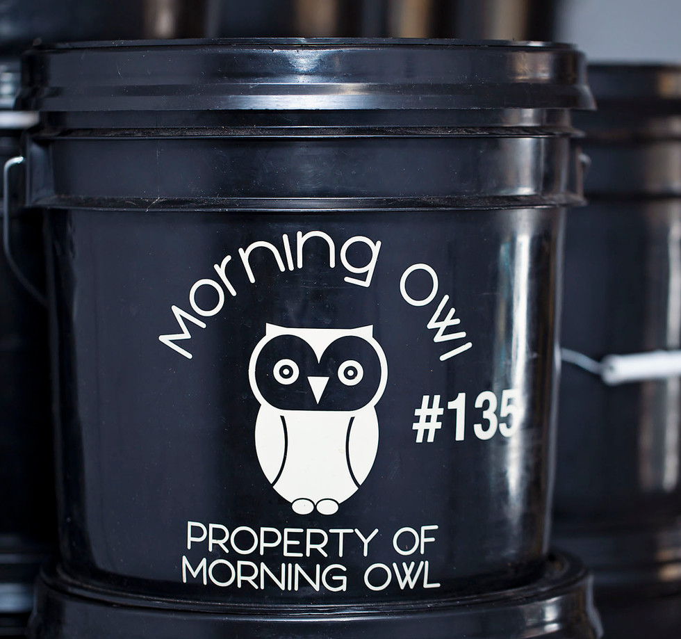 MorningOwl_1