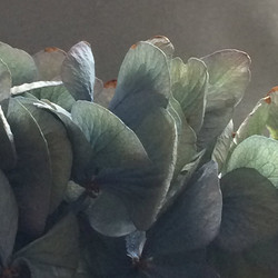 lrCorry zwart nature in blue  RGB kleure