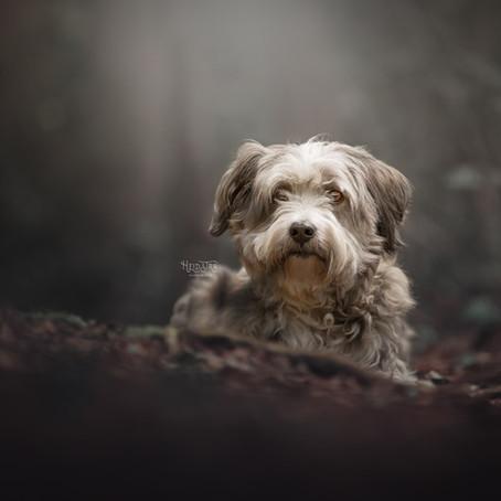 Hondenmensen