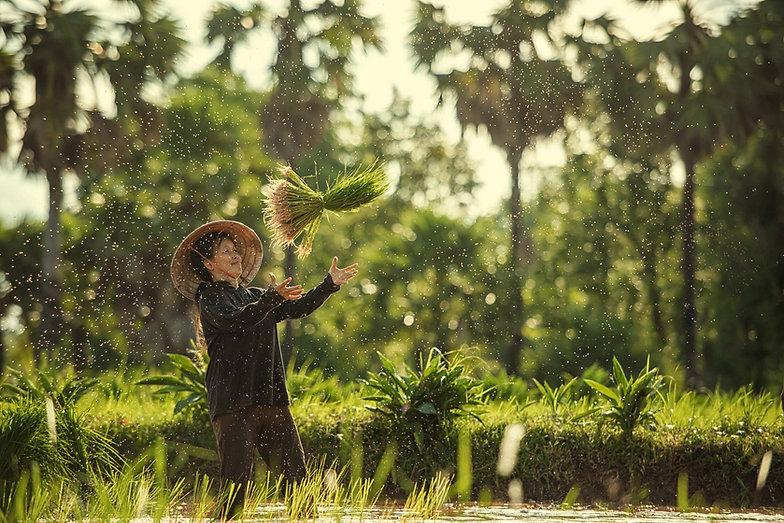 thailand-farmers-rice-planting-grow-rice
