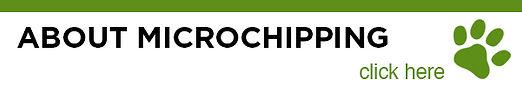 411_CHIP.jpg