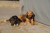 Honden op de boerderij