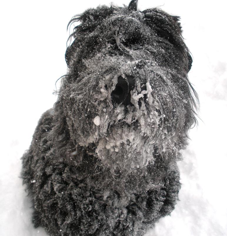 Danika snowface