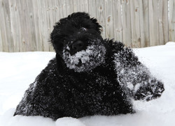 Gish and his first snow