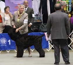 Yushka at 2014 BRTCA Nationals