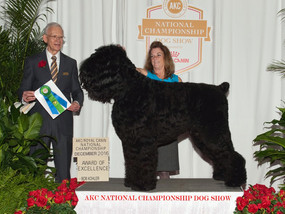 Award of Excellence at AKC National Championship Show!
