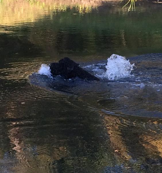 Danika swims