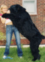 Black Russian Terrier William Edward Dale.