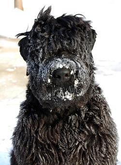 Snow Thinker
