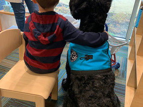 Our Atti The Therapy Dog in the action!