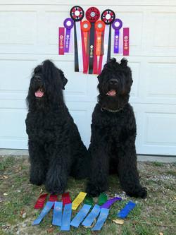Danika and Jordan UKC Total Dogs