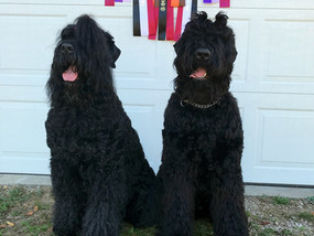 Two URO Titles, 2 x UKC Total Dogs and a lot of swimming!