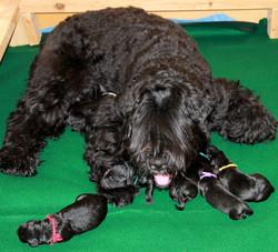 Anushka and her newborn babies.