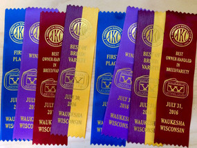 AKC Show. Danika's 2 x Best of Breed!