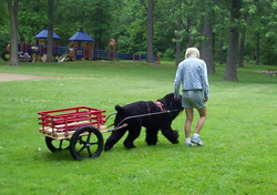 Milana-pulling-cart