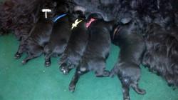 Anushka's puppies.