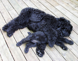 8 weeks old Anushka and 5 mo Milana