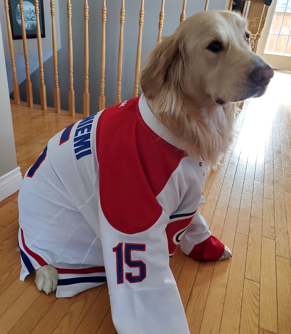 Montreal Canadiens dog