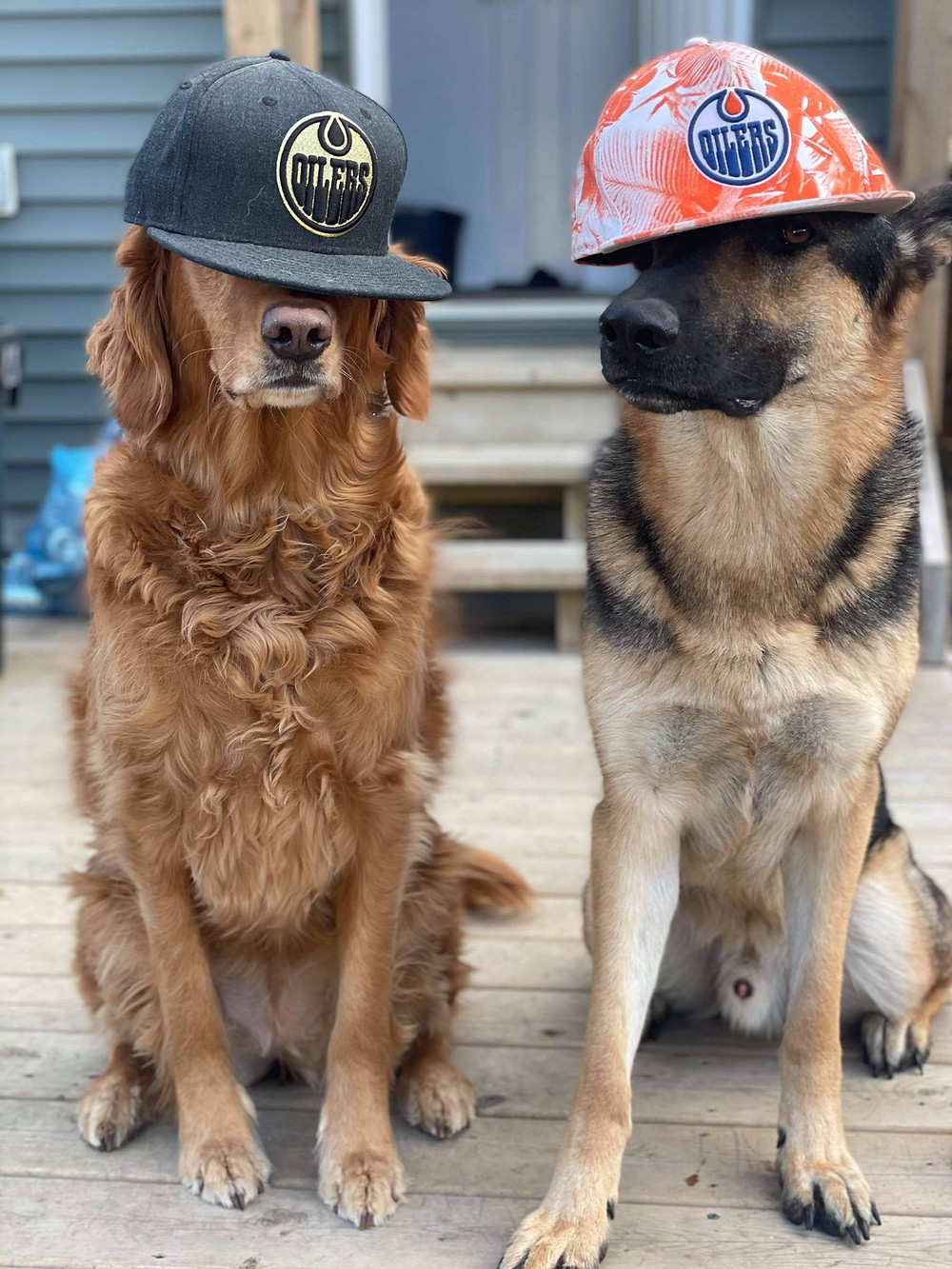 Oilers dogs