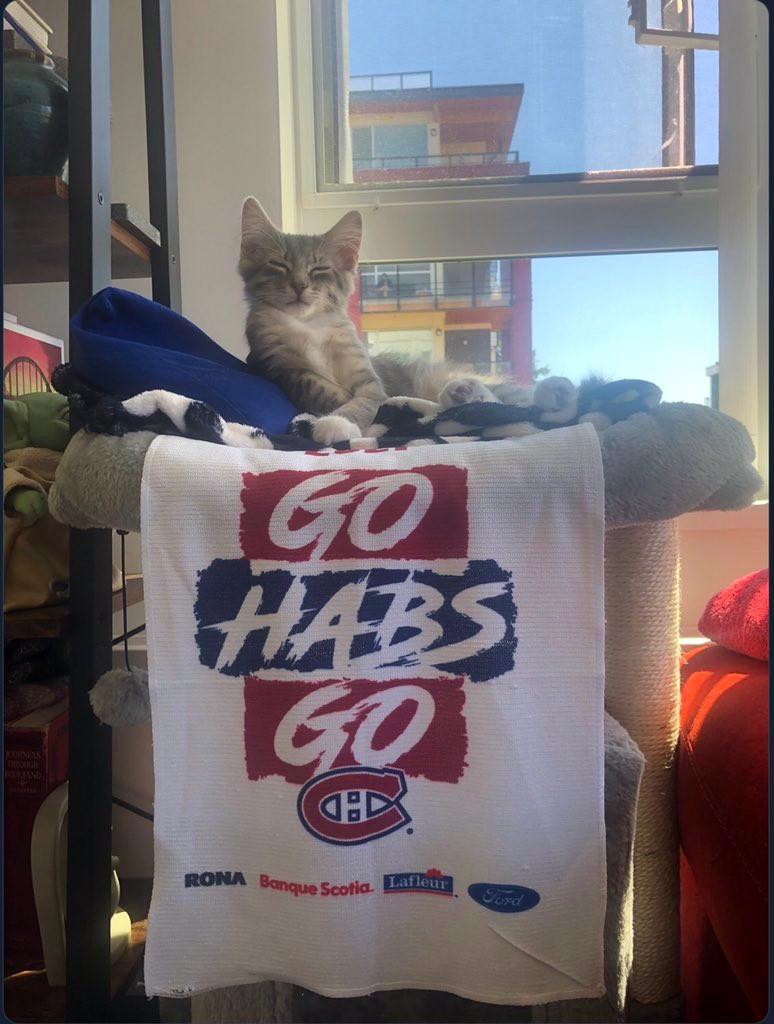 Hamlet Habs cat