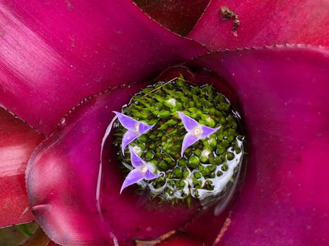 A flower inside a flower