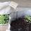 Thumbnail: My Little Garden - 2 Squares Set