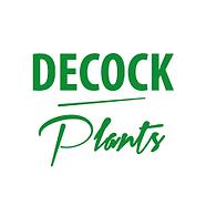 Decock Plants